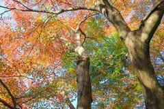Overweldigen gemengd van kleur van aard Stock Fotografie