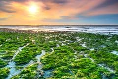 Overweldigend bemost strand en mooie zonsondergang dichtbij Etretat, Normandië, Frankrijk stock afbeeldingen