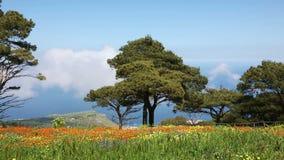 Overweldigend de lentelandschap van Siciliaanse aard stock footage