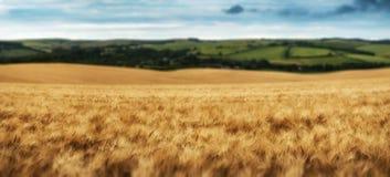 Overweldigend de tarwegebied van het plattelandslandschap in de Zomerzonsondergang Stock Afbeeldingen
