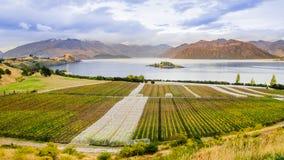 Overweldigend Druivengebied royalty-vrije stock foto's