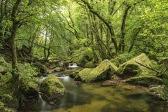 Overweldigend landschap iamge van rivier die door weelderige groen vloeien voor Royalty-vrije Stock Foto's