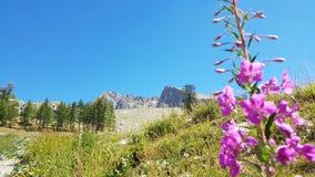 Overweldigende bergmeningen Stock Afbeeldingen