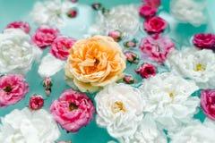 Overweldigende bloementextuur van rozen in water op blauwe achtergrond royalty-vrije stock foto's