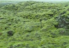 Overweldigende Mening van Moss Covered Lava Field langs de weg van IJsland, Achtergrond Stock Fotografie
