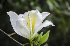Overweldigende ochtend witte bloem stock afbeelding