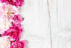 Overweldigende pioenen op houten achtergrond Royalty-vrije Stock Afbeelding