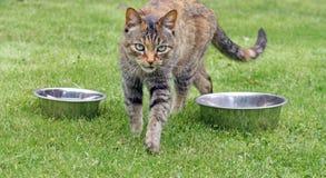 Overweldigende tabby kat Stock Foto