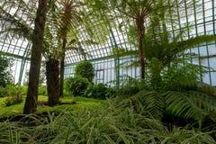 Overweldigende vertoningen van palmen in het Palmpaviljoen bij de Koninklijke Serres in Laeken, Brussel België royalty-vrije stock fotografie