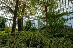 Overweldigende vertoningen van palmen in het Palmpaviljoen bij de Koninklijke Serres in Laeken, Brussel Belgi? royalty-vrije stock foto's
