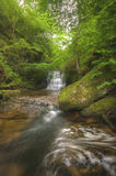 Overweldigende waterval die in weelderige bosscène stroomt Stock Foto's