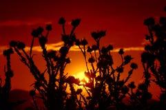 Overweldigende zonsondergang droge bloemen Stock Afbeelding