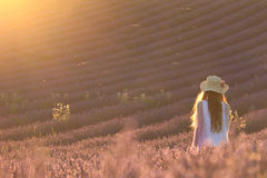 Overwhelmed In A Lavender Field Stock Images