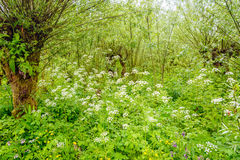 Overwhelmingly growing and flowering wild plants in a Dutch natu Stock Photo