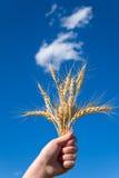 Overwinning voor goede oogst stock fotografie