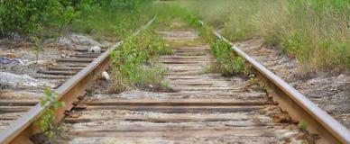 Overwoekerd met bos en grasspoorweg royalty-vrije stock afbeeldingen