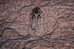 Overwoekerde bakstenen muur van de kerkbouw met vroeger gotisch vensterdetail stock foto's
