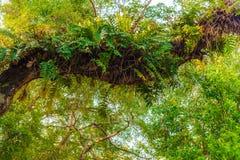 Overwoekerde boomtak Stock Afbeeldingen