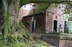 Overwoekerde oude boom Stock Fotografie
