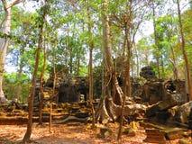 Overwoekerde ruïnes in bos Stock Afbeeldingen