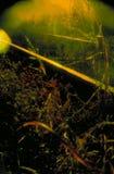 Overwoekerde sporen stock afbeeldingen