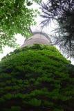 Overwoekerde toren Stock Foto
