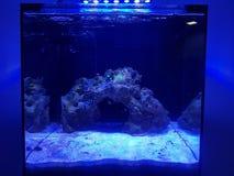 Overzees Aquarium Royalty-vrije Stock Afbeeldingen