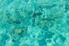 Overzees blauw muntwater Stock Foto
