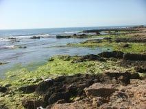 Overzees in de lente met de rotsen met groene installaties worden behandeld die Latium Italië Royalty-vrije Stock Afbeeldingen
