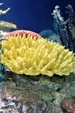 Overzees die koraal in water van een groot aquarium wordt ondergedompeld royalty-vrije stock afbeelding