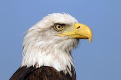Overzees Eagle Royalty-vrije Stock Fotografie