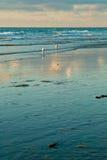 Overzees en de zeemeeuwen Stock Afbeeldingen