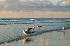 Overzees en de zeemeeuwen royalty-vrije stock fotografie
