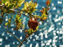 Overzees en granaatappel. Royalty-vrije Stock Afbeelding