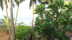 Overzees en kokospalm stock video