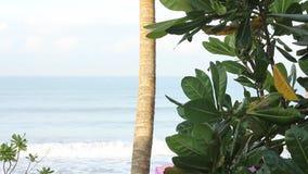 Overzees en kokospalm stock footage