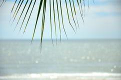 Overzees en palmblad Stock Fotografie