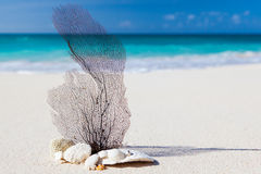 Overzees en strandconcept Royalty-vrije Stock Foto's