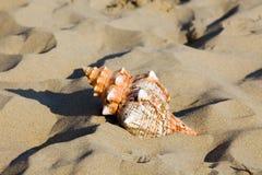 Overzees en strandzand met shell stock afbeelding