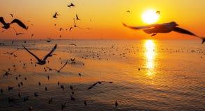 Overzees en vogels bij de zonsondergang Royalty-vrije Stock Afbeelding
