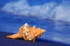 Overzees en zandig strand met shell royalty-vrije stock afbeeldingen