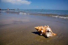 Overzees en zandig strand met shell royalty-vrije stock foto's
