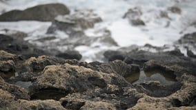Overzees golvenbroodje op de kust stock videobeelden