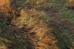 Overzees Gras Royalty-vrije Stock Afbeeldingen