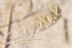 Overzees gras door de baai Royalty-vrije Stock Foto