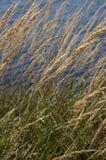 Overzees gras langs strand Stock Fotografie