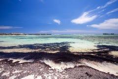 Overzees gras in zand op de kust, de oranje baai van Amoronia, Indische Ocea Stock Afbeeldingen