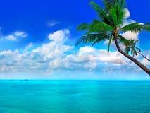 Overzees, hemel en palm Stock Afbeelding