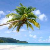 Overzees, hemel en palm Royalty-vrije Stock Foto's