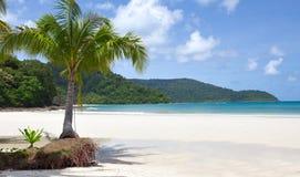 Overzees, hemel en palm Royalty-vrije Stock Afbeeldingen